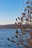 Sikt till och med en buske över en sjö, liten segelbåt i bakgrunden royaltyfria bilder