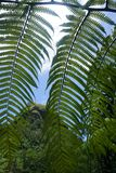 Sikt till och med ormbunkar, Kauai Royaltyfri Bild
