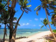 Sikt till och med palmträden över en tropisk lagun för turkos Royaltyfri Foto