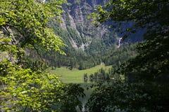 Sikt till och med vårgräsplanfilialerna av träd på en alpin sjö i bergen Sikt av andra sidan av sjön med arkivbilder