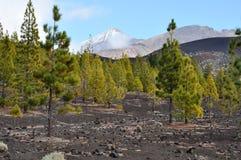 Sikt till Teide, Tenerife Arkivfoton