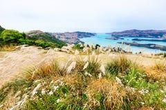 Sikt till turkosbergsjön från en gräs- kulle i nya Zealan Arkivfoton