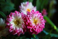 Sikten av den röda blomman Royaltyfria Foton