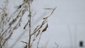 Sikten av djupfryst torkar sidor lager videofilmer