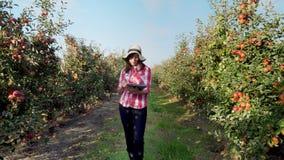 Sikten av en ung kvinnlig affärsbonde eller agronom som arbetar i äppleträdgården, gör anmärkningar på en minnestavla för bättre arkivfilmer