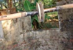 Sikten av ett van vid block hämtar vatten från den djupa brunnen i en hink med hjälpen av en roap fotografering för bildbyråer