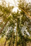 Sikten av filialerna på träd i solnedgången färgar Magiska strålar från solen i skog och träd arkivfoton