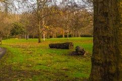 Sikten av gräsplanen parkerar Arkivfoto