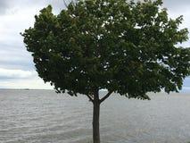 Sikten av Green Bayen från Communiversity parkerar, Green Bayen, Wisconsin, USA Royaltyfri Foto