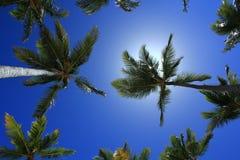 Sikten av kokosnöten gömma i handflatan mot blå himmel Royaltyfri Bild