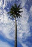 Sikten av kokospalmen och molnig blå himmel på Malaysia sätter på land Royaltyfria Bilder