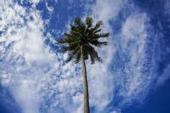 Sikten av kokospalmen och molnig blå himmel på Malaysia sätter på land Arkivfoto