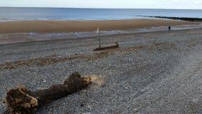 Sikten av loggar in stranden Royaltyfria Bilder