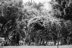 Sikten av Lumpini parkerar, svartvitt Royaltyfri Fotografi