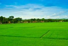 Sikten av ris terrasserar fältet i den tropiska ön i East Asia arkivfoto