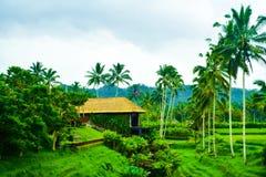 Sikten av romantiska ris terrasserar fält i den molniga blåa himlen med ny morgonluft royaltyfri bild