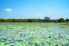 Sikten av Sigiriya vaggar eller Lion Rock i Sri Lanka royaltyfri bild