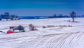 Sikten av snö täckte lantgårdfält i lantliga York County, Pennsylva Arkivfoton
