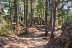 Sikten av träd i ett berg parkerar Arkivfoto