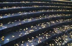 Sikten av trappan i en parkera Arkivbild