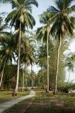 Sikten av trevlig tropisk bakgrund med kokosnöten gömma i handflatan Pulau Sibu, Malaysia Fotografering för Bildbyråer