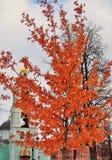 Sikten av Tsaritsyno parkerar i Moskva Ett träd som täckas av orange sidor Royaltyfria Bilder