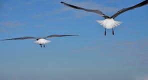 Sikten av två seabirds Royaltyfri Bild