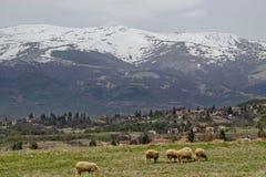 Sikten av vårfältet, det bostads- området och vita får för grupp stänger sig upp skrubbsåret, det Plana berget Royaltyfri Fotografi