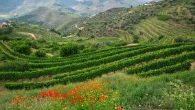 Sikten av vingårdar är på kullar Douro dal Fotografering för Bildbyråer