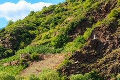 Sikten av vingårdar royaltyfria foton