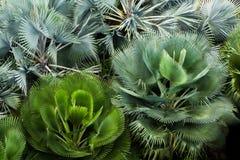Sikten för fågelögat av den gröna fanen gömma i handflatan buskeblomsterrabatten Royaltyfri Bild