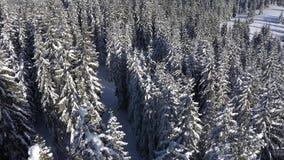 Sikten för surret 4k för vintern täckte den flyg- av snö den vintergröna skogen lager videofilmer
