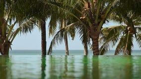 Sikten från den utomhus- pölen på havet med palmträd lager videofilmer