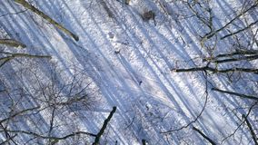 Sikten från höjd till kvinnan i varm kläder strosar längs en bana bland den härliga vintern snö-täckte landskapet clear arkivfilmer