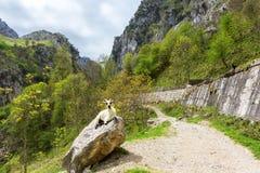 Sikten från omsorger för fotvandra slinga skuggar eller Ruta del Cares, den Picos de Europa nationalparken, landskap av Leon, Spa fotografering för bildbyråer