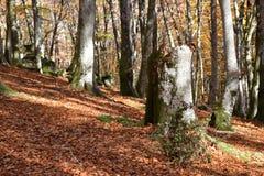 Sikten i bruten stam parkerar Arkivfoto