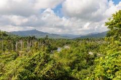 Sikten på djungel med gömma i handflatan på nationalparkalejandroen de humboldt nära baracoaKuba arkivbilder