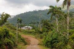 Sikten på djungel med gömma i handflatan på nationalparkalejandroen de humboldt nära baracoaKuba royaltyfri bild