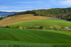 Sikten på jordbruks- landskap med ett fält av barn konserverar och skogen under blå himmel med moln på en vårdag Arkivfoton