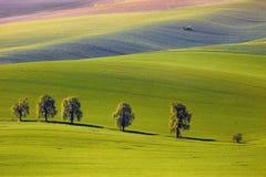Sikten på kastanjerna och traktoren gödslar ett fält i södra Moravia Arkivfoto