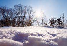 Sikten solen är underifrån glänsande till och med träden och snösnödrivan royaltyfri foto