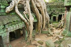 Sikten till fördärvar av templet för Ta Prohm i Siem Reap, Cambodja Royaltyfri Bild