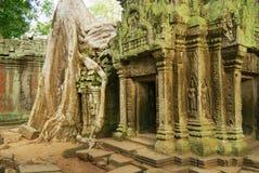 Sikten till fördärvar av templet för Ta Prohm i Siem Reap, Cambodja Royaltyfri Fotografi