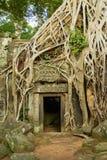Sikten till fördärvar av templet för Ta Prohm i Siem Reap, Cambodja Arkivfoto