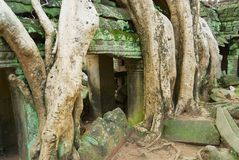 Sikten till fördärvar av templet för Ta Prohm i Siem Reap, Cambodja Fotografering för Bildbyråer