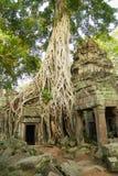 Sikten till fördärvar av templet för Ta Prohm i Siem Reap, Cambodja Royaltyfria Foton