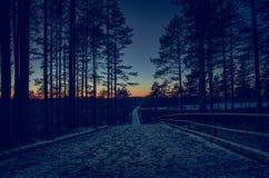 Sikten under en solnedgång i skogen Arkivfoto