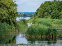 Sikter av den ungerska naturreserven Kis Balaton lilla Balatonin nära från sjön Balaton royaltyfria foton