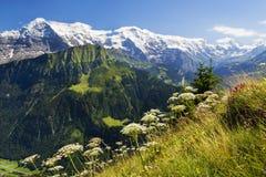 Sikter av Eigeren, Mönchen och Jungfrauen från Schynige Platte, Schweiz arkivfoton