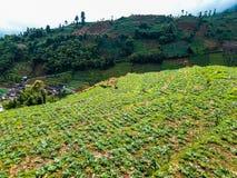 Sikter av risfält i bergen arkivfoto